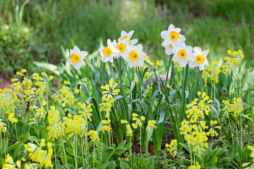 Bulbos de oto o bulbos de primavera jardines sherwood - Bulbos de otono ...