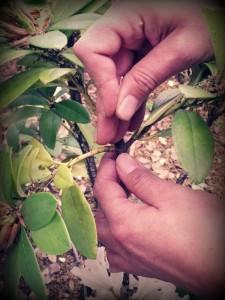 Acupuntura de plantas y árboles
