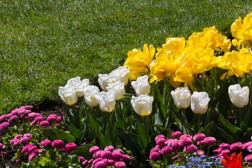 tulipanes-y-vivaces